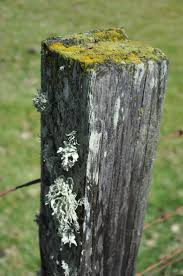 Garden Walls And Fences by 87 Best Stone Walls Fences Gates Images On Pinterest Rustic