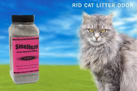 Remove Cat Urine From Sofa How To Get Rid Of Cat Urine Smell