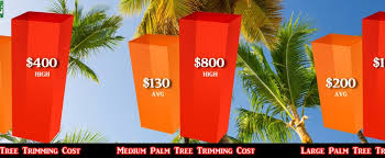 palm tree trimming cost how much liberty tree experts