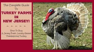 the complete guide to turkey farms in new jersey things to do in