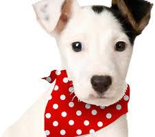 bandanas handmade bandanas for dogs scarves