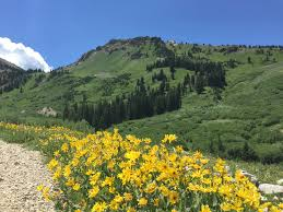 albion basin summer activities in alta discover alta
