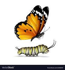 plain tiger butterfly and caterpillar royalty free vector