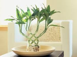Best Plants For Bedroom Good And Bad Feng Shui Plants