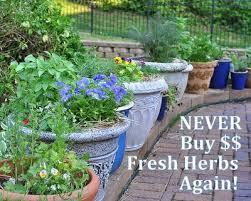 never buy fresh herbs again u003cbr u003e how to grow fresh herbs at