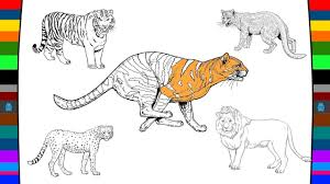 wild cats coloring pages name and sound learning wild animals