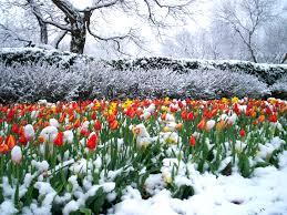 Dallas Arboretum Map by 60 Best Winter Wonderland Images On Pinterest Winter Wonderland