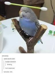 Parrot Meme - 80 fresh memes for today 190 fresh memes memes and dankest memes