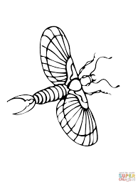flying earwig coloring page free printable coloring pages