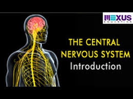 Anatomy And Physiology Introduction To The Human Body The Central Nervous System Introduction Youtube