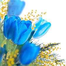 tulips flowers blue tulips flowers seeds bonsai tulip seeds flower plants