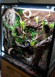 Vivarium Wood Decor I Got A Bit Moss Crazy On My Planted Vivarium The Crested Gecko