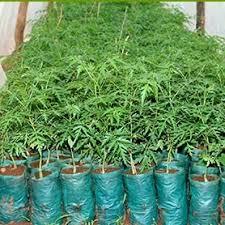 treeseedlingssmall jpg