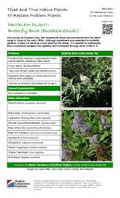 native plants of china problem plant butterfly bush master gardeners of northern virginia