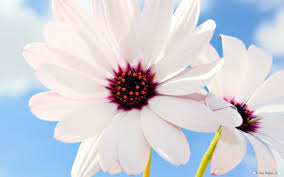 Beautiful Flower Pictures Free Flower Wallpaper Beautiful Flower Photography 15 Wallpaper