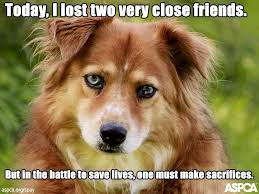 Aspca Meme - aspca it s national spay and neuter month please share
