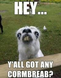 I Know You Want Me Meme - biggus dickus biggusdickus419 on pinterest