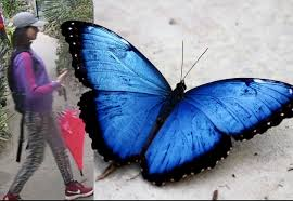 seeking who stole butterfly from exhibit boing boing