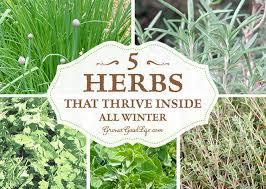herbs indoors grow herbs indoors 5 herbs that thrive inside
