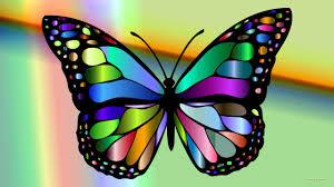 colorful butterfly barbaras hd wallpapers