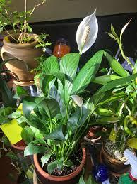 2014 indoor gardening my aerogarden and houseplant blog