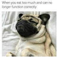 Much Dog Meme - memes about eating too much food
