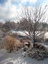 in the garden ornamental grasses add winter interest the