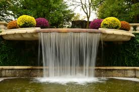 free images nature waterfall flower pond green swimming