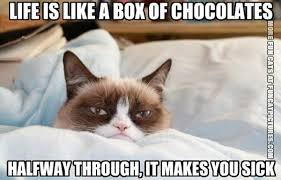 Life Is Like A Box Of Chocolates Meme - chocolate archives fun cat pictures