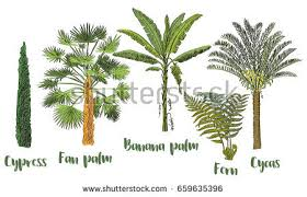 vector set tropical palm trees stock vector 659635396