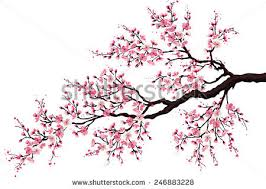 branch blossoming cherry tree isolated on stock vector 246883228