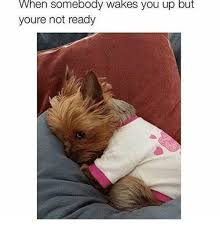 Hen Meme - hen somebody wakes you up but youre not ready you meme on