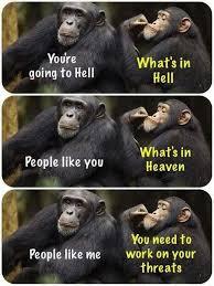 Chimp Meme - because chimpanzees comedycemetery