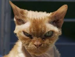 Cat Meme Maker - deluxe mad cat memes mad cat meme generator image memes at relatably
