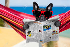 Red Flag Newspaper French Bulldog Dog Relaxing On A Fancy Red Hammock With Red