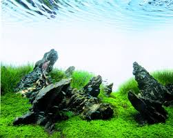 Takashi Amano Aquascaping Techniques 33 Best Hard Scape Inspiration Images On Pinterest Aquascaping