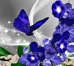 butterfly wallpapers hd android apps on google play