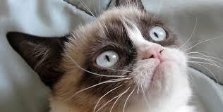 Grumpy Face Meme - grumpy cat a catrospective