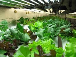 hydroponic vs soil gardening archives atlantis hydroponics blog