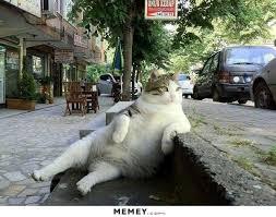 Cat Sitting Meme - a fat cat sitting in the street memey com