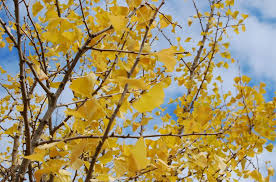 when should i be watering trees in fall