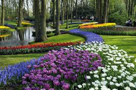 keukenhof the garden of europe netherlands tourism