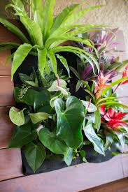 vertical gardening with tropical plants http www singinggardens