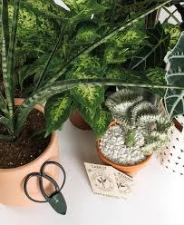 seattle native plants meet seattle u0027s new crop of plant stores seattle met