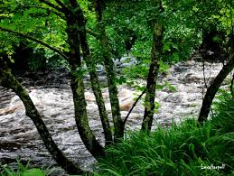 river glen e2 80 93 ireland wild lush fishing lexa harpell