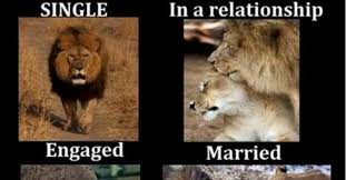 Lion Sex Meme - the hilarious differences between single and married life for