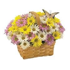 Easter Basket Delivery Daisy A Day Easter Basket Charlevoix Floral