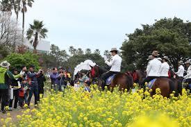 Flower Area - seogwipo yuchae canola flower international walking festival