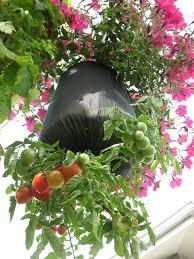 update upside down tomato planters u2013 gardeninggrrl