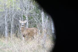 six effective ground blind hunting strategies outdoorhub